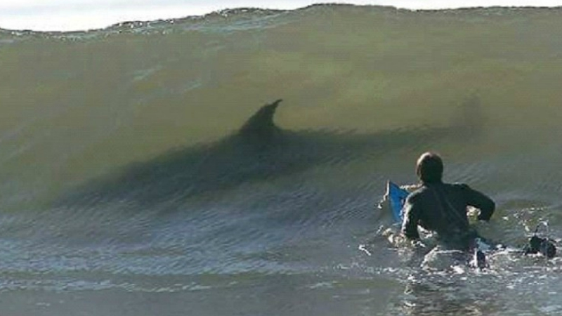 Schaut euch diese 14 Fotos an und ihr werdet nie wieder im Meer baden wollen!