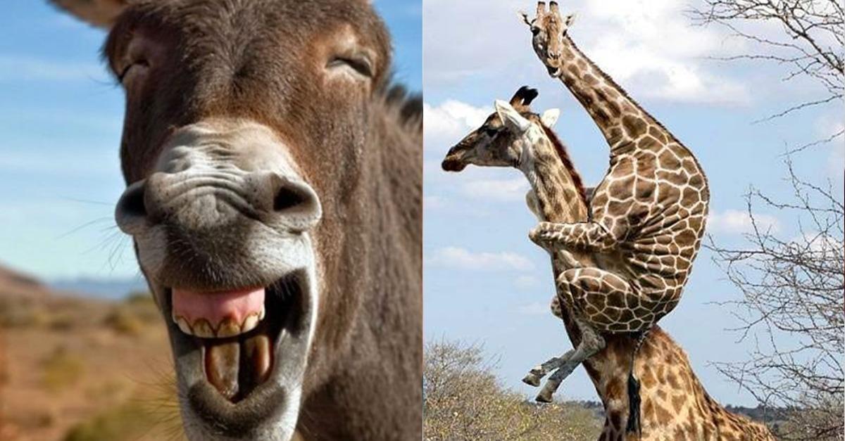 Lustig Tiere Bilder