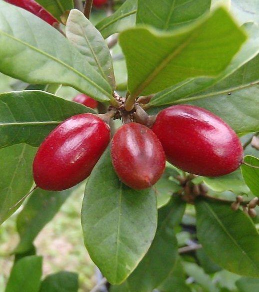 90 exotische Früchte und Gemüsesorten, die man probiert haben muss, bevor man stirbt