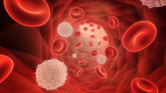 Cholesterin: Wie kann man Cholesterinwerte senken? HDL, LDL, Ernährung, Grenzwerte, Behandlung