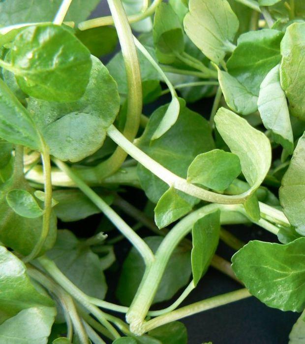 20 gesunde und reichhaltige Lebensmittel, die euer Training perfekt ergänzen
