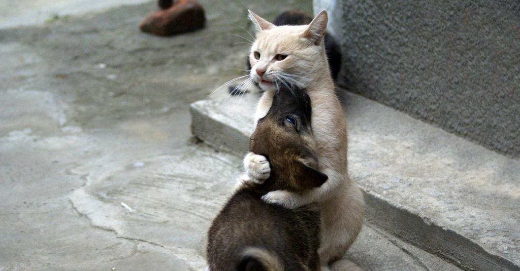 Können Katzen Ihre Tage Bekommen
