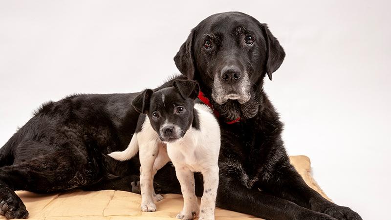 diesen fehler machen wir wenn wir das alter unserer hunde. Black Bedroom Furniture Sets. Home Design Ideas