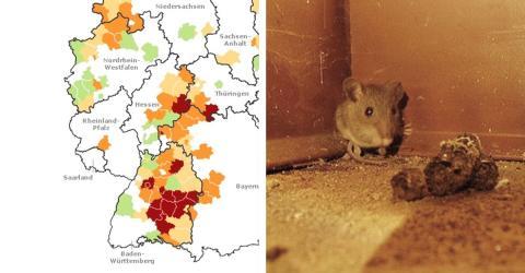 Hantavirus in Deutschland auf dem Vormarsch