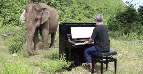 Musiker spielt Klavier für einen blinden Elefanten: Dessen Reaktion ist großartig!