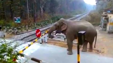 Wenn ein Elefant einen Bahnübergang überqueren will
