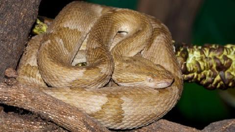 Queimada Grande: Brasilianische Insel wird von gefährlichen Schlangen erobert