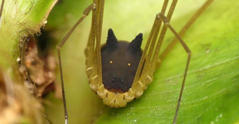 Forscher trifft auf kleines Tier im Regenwald: Es hat einen extrem seltsamen Kopf!