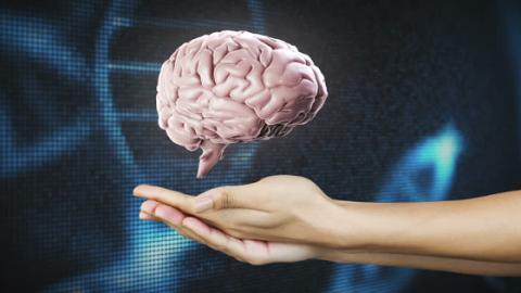 Studie zeigt: Ob man Links- oder Rechtshänder wird, hat nichts mit dem Gehirn zu tun