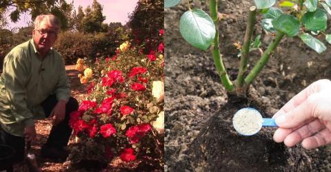 rosen im fr hjahr rosen schneiden und weitere tipps f r den fr hling. Black Bedroom Furniture Sets. Home Design Ideas