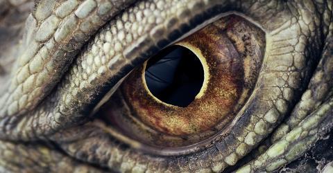 Frau sieht Drachen anstelle von Gesichtern, dann schaffen Ärzte Erstaunliches