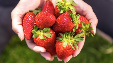Erdbeeren aus diesem Land sind gesundheitsgefährlich!