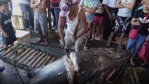 Angler macht mysteriöse Entdeckung in einem 200-kg-Fisch