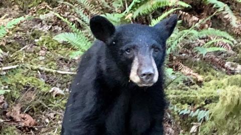 Sie füttern einen Bären für ein Selfie: Mit diesen Folgen haben sie jedoch nicht gerechnet!