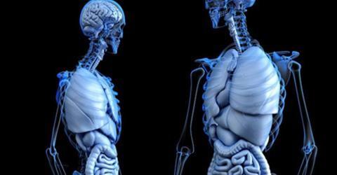 Forscher entdecken neues Organ im menschlichen Körper