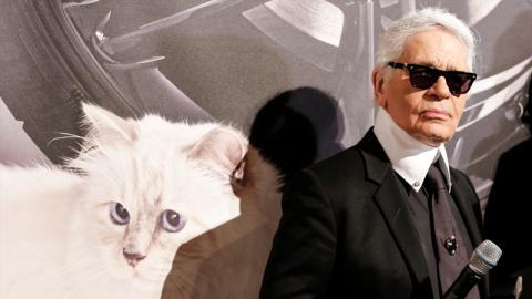Karl Lagerfeld hinterlässt großes Erbe: Das Schicksal seiner Katze sorgt für Entsetzen