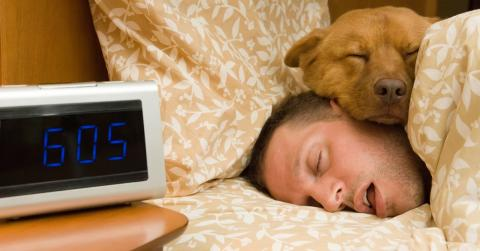 Mit dem Hund in einem Zimmer schlafen: Gute oder schlechte Idee?