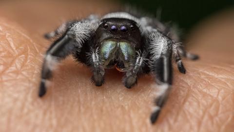 Spinne nistet sich an beunruhigender Körperstelle eines Mannes ein