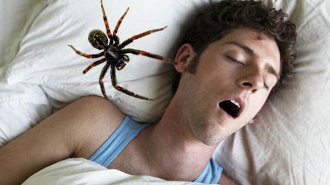 So viele Spinnen essen wir wirklich im Schlaf