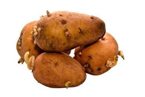 Gesundheit: Eine bestimmte Frucht schützt vor Kartoffelkeimen und deren fatalen gesundheitlichen Folgen