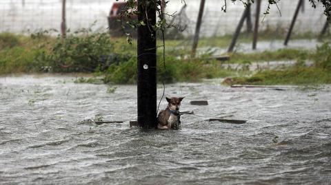 Überschwemmungen in den USA: Dieser Hund wurde an einen Pfahl gebunden und seinem Schicksal überlassen