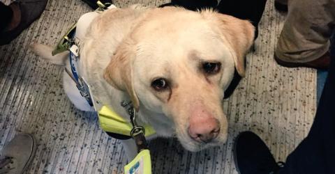 Dramatischer Fall in U-Bahn: Blinder Mann und Hund kämpfen mit Tränen