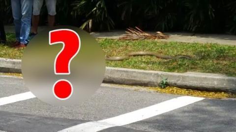In Singapur wurde dieser heftige Kampf auf einer Straße beobachtet!