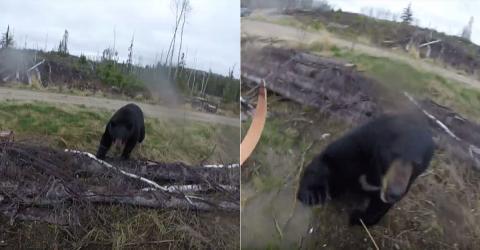 Er geht mit Pfeil und Bogen auf die Jagd: Dann greift ein Schwarzbär an (Video)