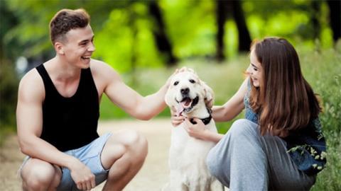 Flirten hund