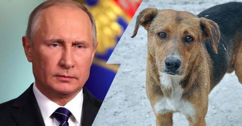 WM 2018 in Russland: Säuberungsaktionen von Tieren im Gange