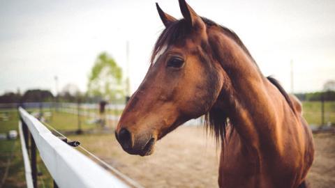 Pferde können mit Menschen kommunizieren