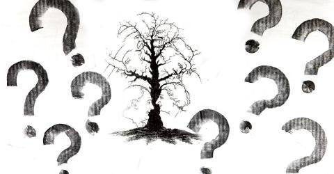 Dieses Bilderrätsel lässt alle verzweifeln: Wie viele Gesichter sind in diesem Baum versteckt?