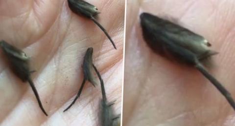 Ekel-Fund in Küche: Als er Forschern diese Kreaturen zeigt, wird ihm Angst und Bang
