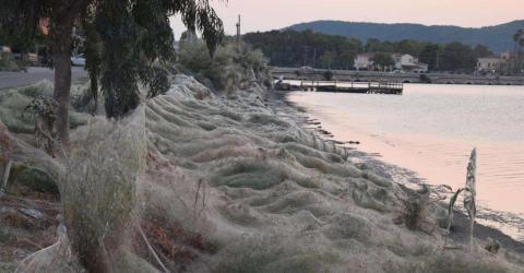 Riesiges Spinnennetz verwandelt Urlaubsstrand in einen Alptraum