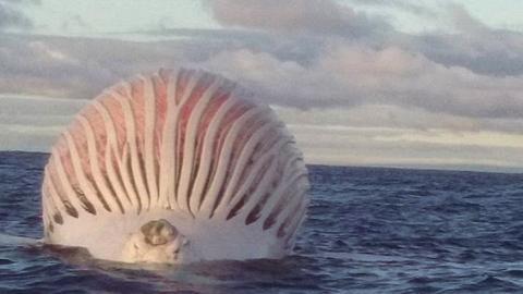 Fischer begegnen seltsamer Kugel vor der Küste. Dann ergreifen sie die Flucht
