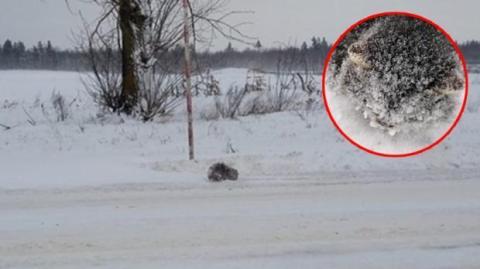 Bei -18 °C: Mann entdeckt Gefrorenes im Schnee. Als er sieht, was es ist, kommen ihm die Tränen!