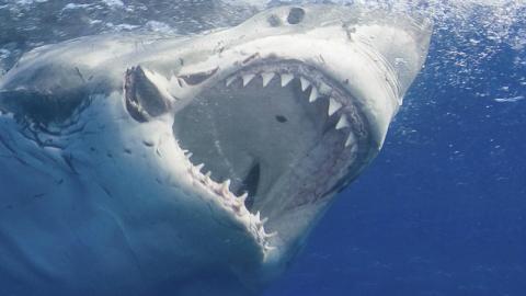Weißer Hai beißt 13-Jährigen: Video vom Unfallort erschüttert das Netz!
