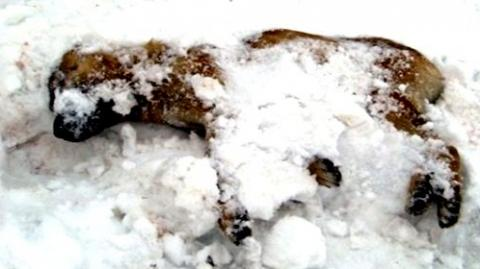 steckt im schnee fest