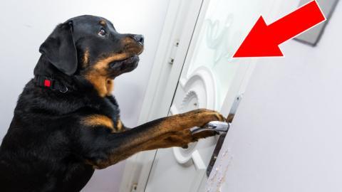 Ein Hund öffnet den Sanitätern die Haustür, die seinem Herrchen nach einer inneren Blutung zu Hilfe kommen