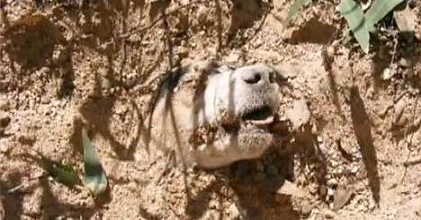 Malta: Männer retten eine Hündin, die mit 40 Schrotkugeln