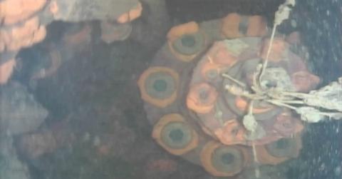Fukushima: Roboter filmt erstmals Brennelemente
