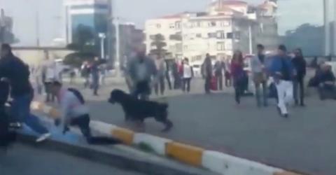 Straßenschlägerei: Plötzlich greift ein Rottweiler ein
