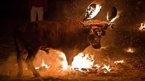Viel schlimmer als normaler Stierkampf: Die Jagd auf Toro de Fuego!