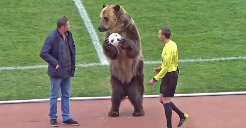 Russland: Bär eröffnet Fußballspiel und sorgt für heftige Reaktionen