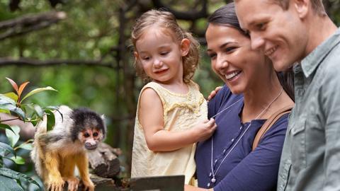 Erlebnis der besonderen Art: Affe crasht auf besonders lustige Weise Familienfoto auf Bali