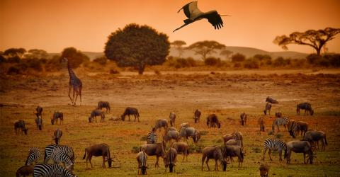 Mehr als nur Artenvielfalt bedroht: Die UNO macht einen erschreckenden Bericht