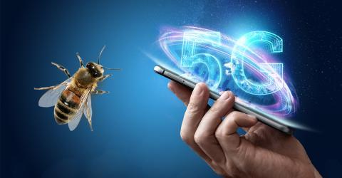 Die unerwarteten und schockierenden Auswirkungen des 5G-Netzes auf Insekten