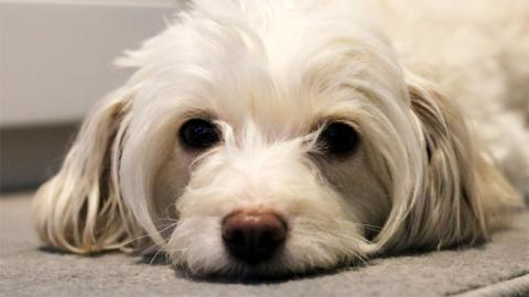 Hundesitter vergeht sich auf's Übelste an Tier und filmt alles!