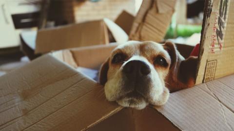 Hund zerreißt Paket der Nachbarin. Was darin zum Vorschein kommt, zerstört Beziehung für immer