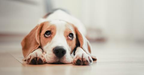 Wie kommt es, dass uns der Hundeblick weich macht?